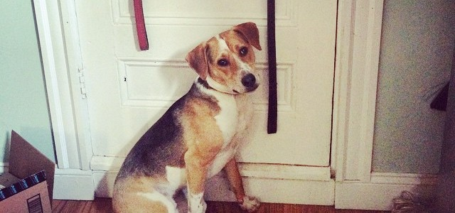 Tucker, looking innocent.